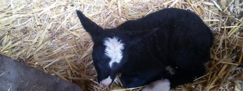 Seminář Parazitologie v chovu ovcí a koz